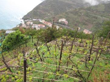 Cinque Terre wine terraces
